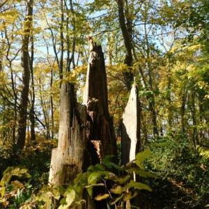 素晴らしき森の切り株ワールド・シーズン3