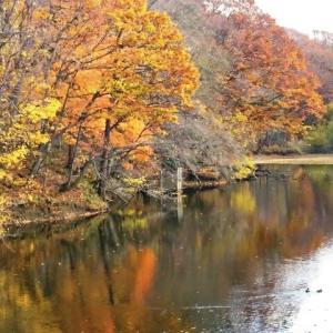 江別「秘密の池」に肉薄・弐の池「大麻中央公園 にもう1つの池」