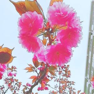 春の花たちと脱皮のシーズン