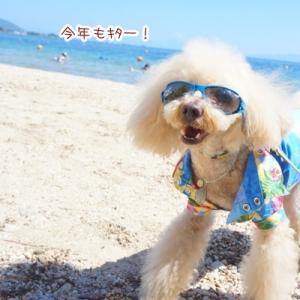 わんこ水泳部・琵琶湖遠征2019