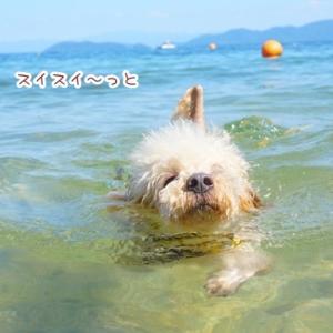 サイコー!びわ湖!泳いで遊んで♪