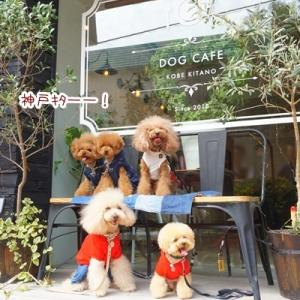 JOY for dog loversさんでランチ♪
