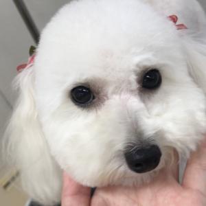 【ひごペット田原本店】美容室便り♪