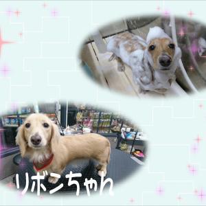 【ひごペットイオンモール出雲店】☆10月15日ご来店のわんちゃん☆