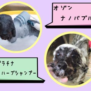 【ひごペットフレンドリー岸和田店】美容室便り☆