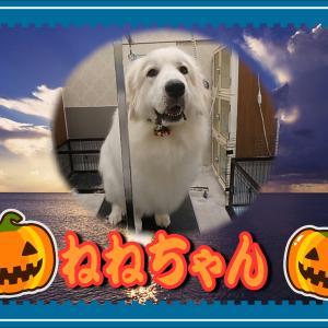 【ひごペットフレンドリーイオンモール今治新都市店】10月20日ご来店のわんちゃん達♪