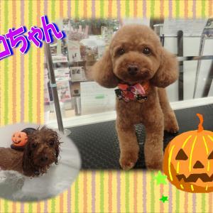 【ひごペット エミフルMASAKI店】10月20日ご来店のわんちゃん達♪