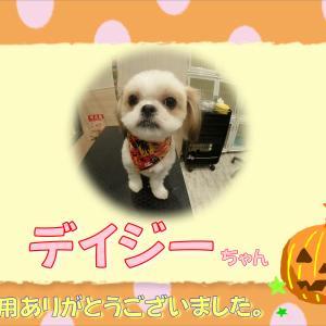 【ひごペット カナート洛北店】10月20日ご来店のわんちゃん♪♪