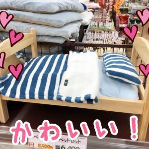 【ひごペットフレンドリー クラウンパーク伊丹店】フロア便り~ ペット用ウッドベッドのご紹介!!