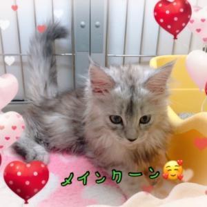 【ひごペットフレンドリー 東淀川店】 ネコちゃん紹介♡