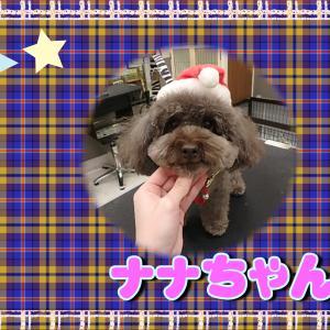 【ひごペットフレンドリーイオンモール今治新都市店12月6日ご来店のわんちゃん達♪】