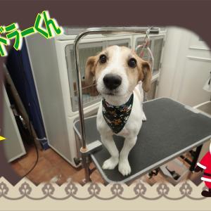 【ひごペット エミフルMASAKI店】12月7日ご来店のわんちゃん達♪