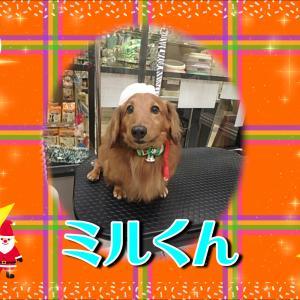 【ひごペットフレンドリーイオンモール今治新都市店】12月8日ご来店のわんちゃん達♪