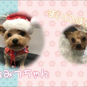 【ひごペットフジグラン神辺店 美容室より】12月9日ご来店のワンちゃん♪