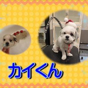 【ひごペットイオンモール今治新都市店】12月12日ご来店のわんちゃん達♪