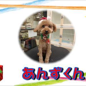 【ひごペットフレンドリーイオンモール今治新都市店】12月15日ご来店のわんちゃん達♪