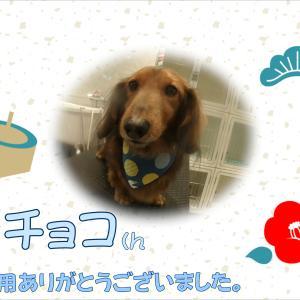 【ひごペット 洛北阪急スクエア店】1月18日ご来店のわんちゃん♪♪