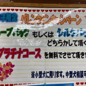 【ひごペット田原本店】バレンタインキャンペーン♪