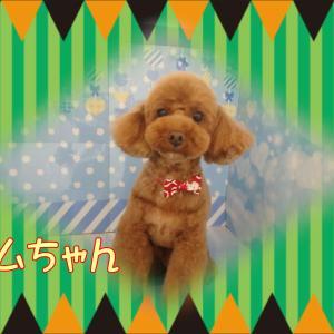 【ひごペット ゆめタウン廿日市店】2月24日ご来店のワンちゃん達♪