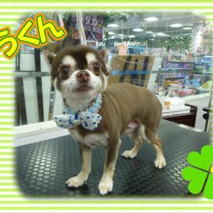 【ひごペット エミフルMASAKI店】 4月8日ご来店のわんちゃん達♪