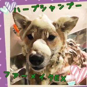 【ひごペットフレンドリーイオンスタイル海老江店】美容室便り♪