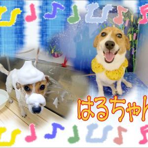 【ひごペット ゆめタウン廿日市店】6月12日ご来店のワンちゃん達♪