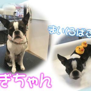 【ひごペット フジグラン神辺店 美容室より】6月19日ご来店のワンちゃん♪