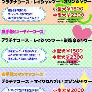 【ひごペット エミフルMASAKI店】 7月29日ご来店のわんちゃん達♪