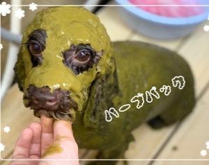 【ひごペットフレンドリー東淀川店】美容便り☆