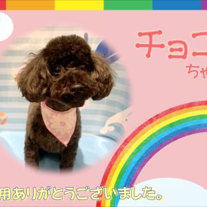 【ひごペット 洛北阪急スクエア店】7月5日ご来店のわんちゃん♪♪