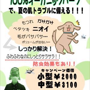 【ひごペットフレンドリーゆめタウン高松店】美容便り
