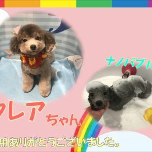 【ひごペットフレンドリー洛北阪急スクエア店】7月14日ご来店のわんちゃん♪♪
