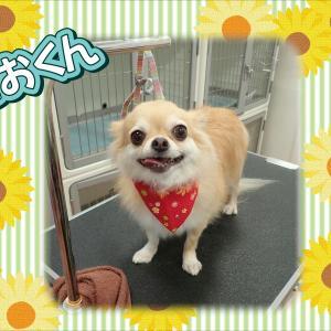 【ひごペット エミフルMASAKI】7月31日ご来店のわんちゃん達♪