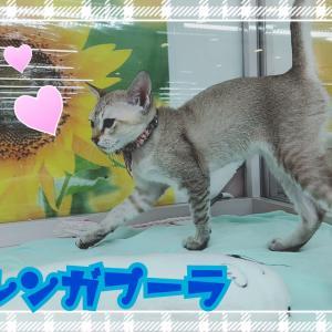 ひごペットフレンドリーゆめタウン高松店【犬猫便り】