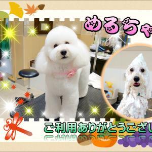 【ひごペットフレンドリー プライムツリー赤池店】ワンちゃん紹介