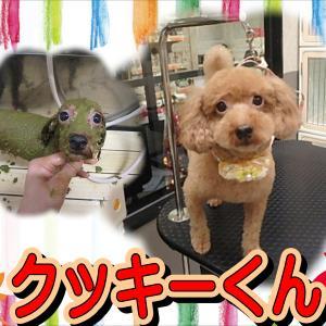 【ひごペットフレンドリーイオンモール今治新都市店】9月20日ご来店のわんちゃん達♪
