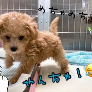 【ひごペットフレンドリー 東淀川店】 わんちゃん紹介♡