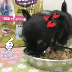 【ひごペットフレンドリー泉ヶ丘店】ネコちゃんの腸活!!