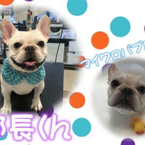 【ひごペット フジグラン神辺店 美容室より】9月25日ご来店のワンちゃん♪