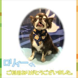 【ひごペット 洛北阪急スクエア店】9月29日ご来店のわんちゃん♪