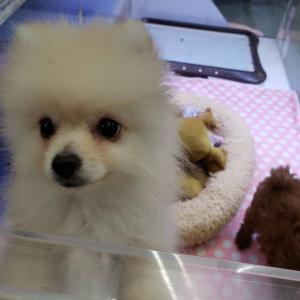 【ひごペットフレンドリー泉ヶ丘店】仲良し☆2匹の子犬ちゃん☆