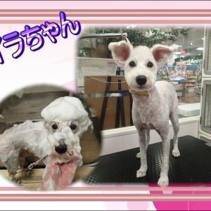【ひごペット エミフルMASAKI店】 11月25日ご来店のわんちゃん達♪