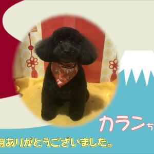 【ひごペット 洛北阪急スクエア店】1月19日ご来店のわんちゃん♪