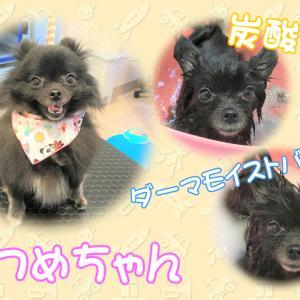 【ひごペット フジグラン神辺店 美容室より】1月20日ご来店のワンちゃん♪