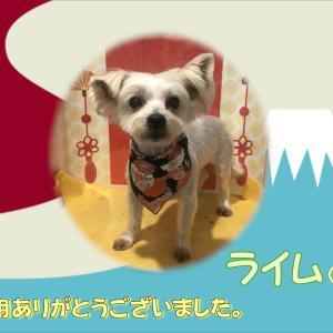 【ひごペット 洛北阪急スクエア店】1月20日ご来店のわんちゃん♪♪