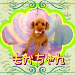 【ひごペット ゆめタウン廿日市店】1月20日ご来店のワンちゃん達♪