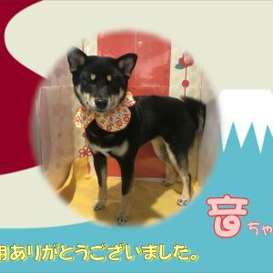 【ひごペット 洛北阪急スクエア店】1月27日ご来店のわんちゃん♪