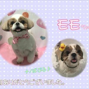 【ひごペット 洛北阪急スクエア店】2月28日ご来店のわんちゃん♪♪