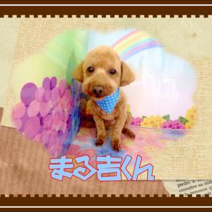 【ひごペット ゆめタウン廿日市店】5月17日ご来店のワンちゃん達♪