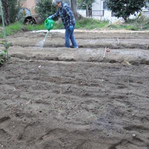 玉ねぎ と ブロッコリーの 植え付け